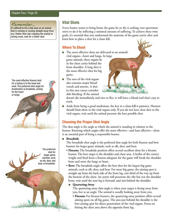 Best 25+ Anatomia de animais images on Pinterest | Hunting, Hunting ...