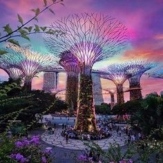The otherworldly Gardens by the Bay in Singapore.