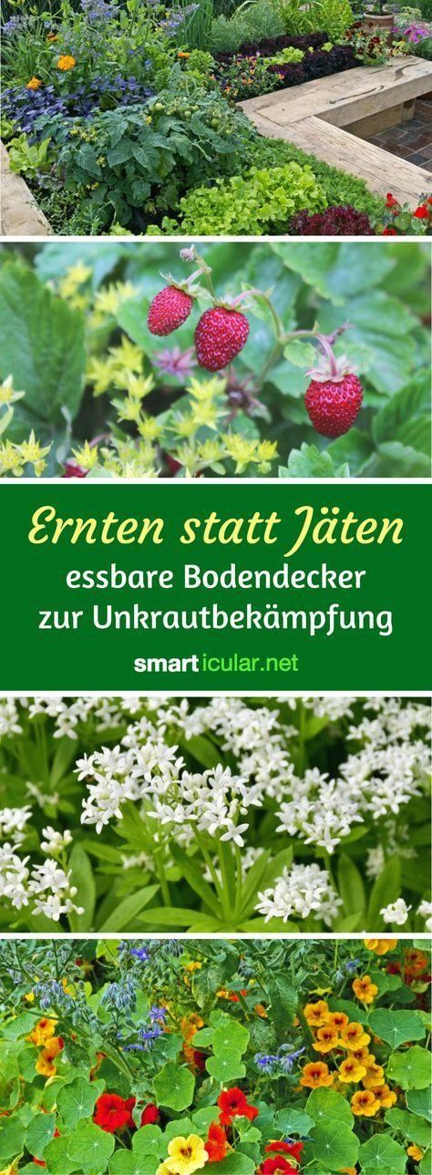 Wo kein Licht, da auch kein Unkraut. Diese Pflanzen wachsen schneller als die meisten Beikräuter, sparen dir das Jäten und bescheren dir sogar reiche Ernte