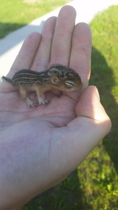 I found this guy all alone in the grass.