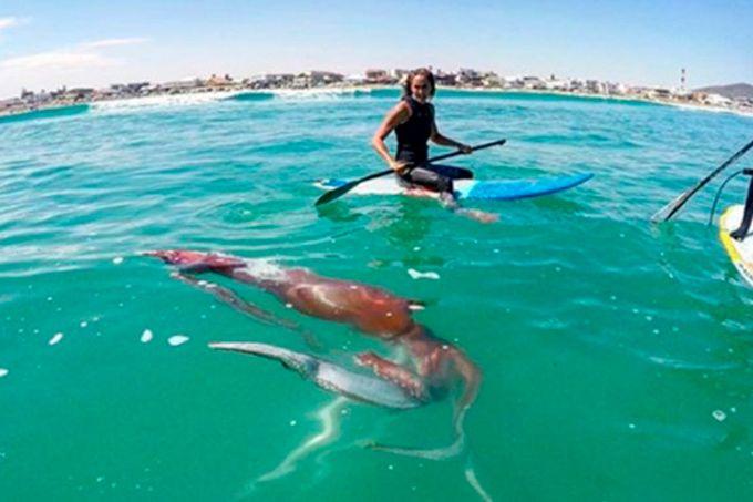 Calamar gigante ataca a surfista y casi lo arrastra al fondo del mar (+video)