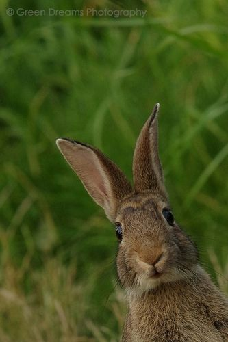 This picture encapsulates this Easter season for me: green, living grass, a curious little bunny, new life all around us. How sweet.