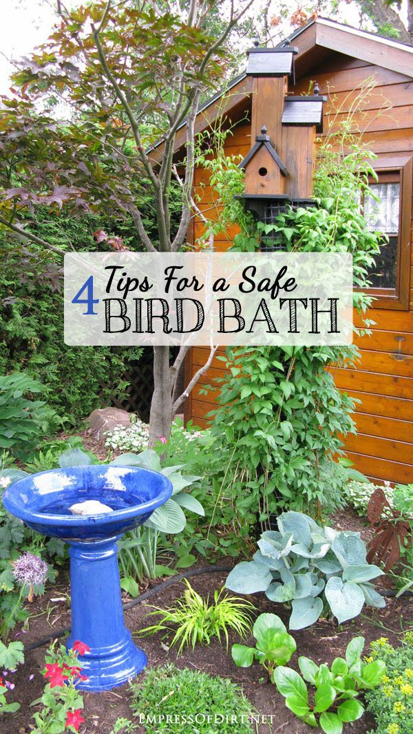 Tips for a safe bird bath -- what you need to know to prevent birds from drowning or catching illnesses from unsafe bird baths