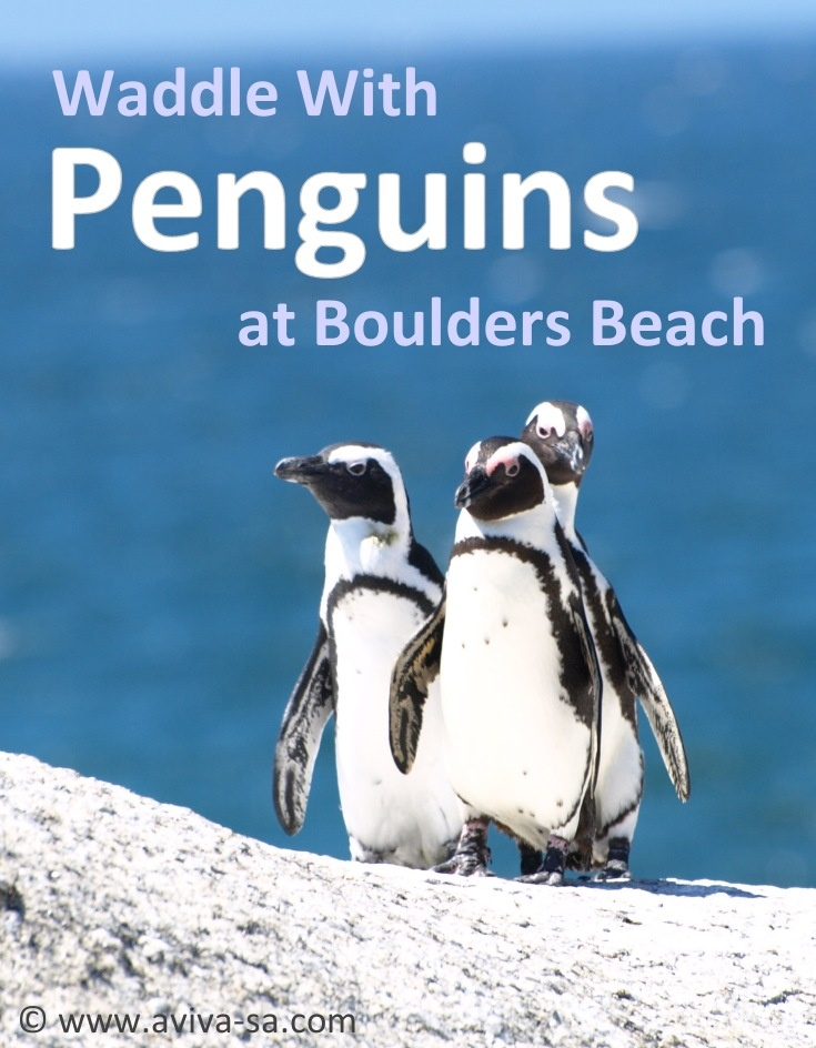 Waddle with Penguins on Boulders Beach - Cape Town - South Africa