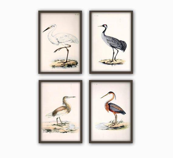 Wild Birds Wall Art Print Set Of 4 Antique Bird Decor Antique Bird Illustration Ornithology Poster Bird Print Bird Decor Set Of 4 Bird Wall Art Bird Prints Wall Art Prints