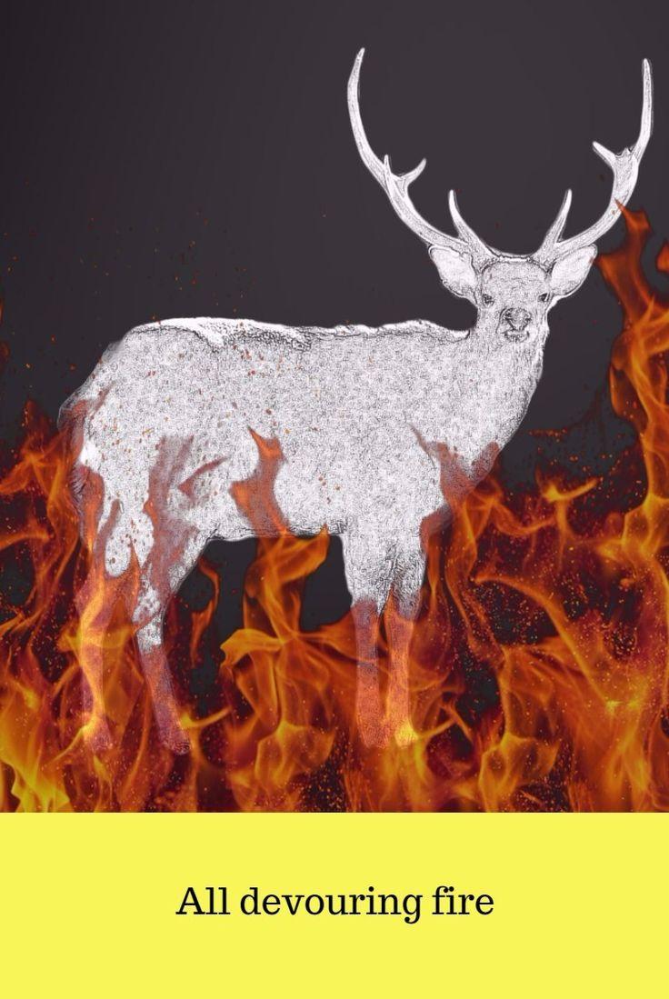 Против сжигания лесов