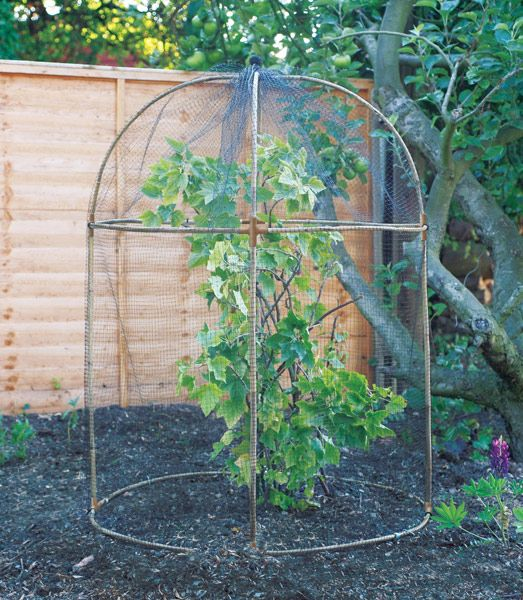 Round fruit cage. Ideal for protecting young blackcurrant, blueberry, redcurrant and cranberry bushes, as well as many other ornamental and edible plants, from birds and animals, this round fruit cage also looks pretty smart. In winter you could also cover it with fleece (which is not included) to offer protection from the frosts.