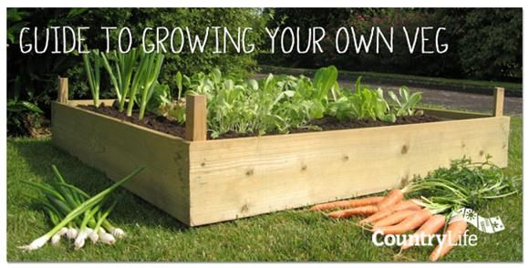 Thinking about growing your own vegetables but you're not sure where to start? Well it couldn't be easier, follow Fergal's Grow Your Own hints and tips on what you need to do and how to do it....
