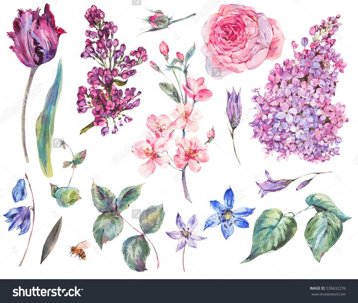 https://image.shutterstock.com/z/stock-photo-spring-set-vintage-watercolor-bouquet-of-pink-roses-leaves-blooming-branches-of-peach-lilacs-539632276.jpg