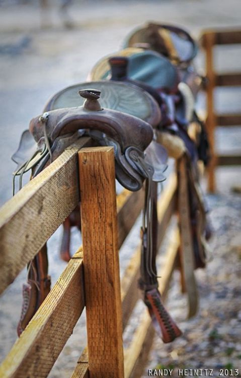 It might not be a horse but you still get the image of horse with the way the saddles sit on the fence.