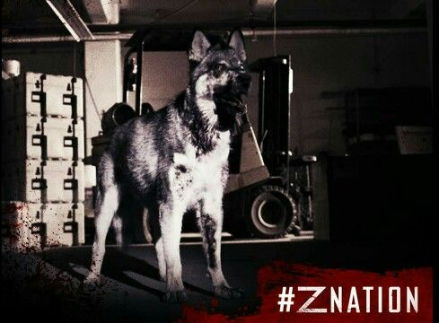 Killer Zombie Dogz Food Truck Illinois