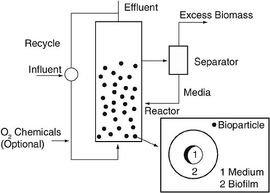 EXPANDED AND FLUIDIZED BED BIOFILM REACTORS