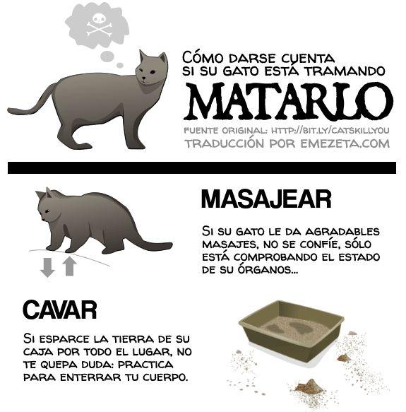 Como darse cuenta si su gato está tramando matarlo.
