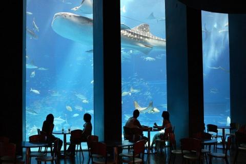 okinawa churaumi aquarium cafe ocean blue