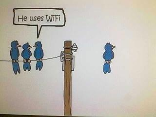 lucky bird: Laughing, Wifi, Funny Things, Wireless Birds, Funny Social, Funny Shit, Cute Funny Stuff, Funny Pictures, Funny Memes
