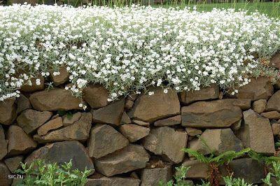 Detalle de un jardín florecido
