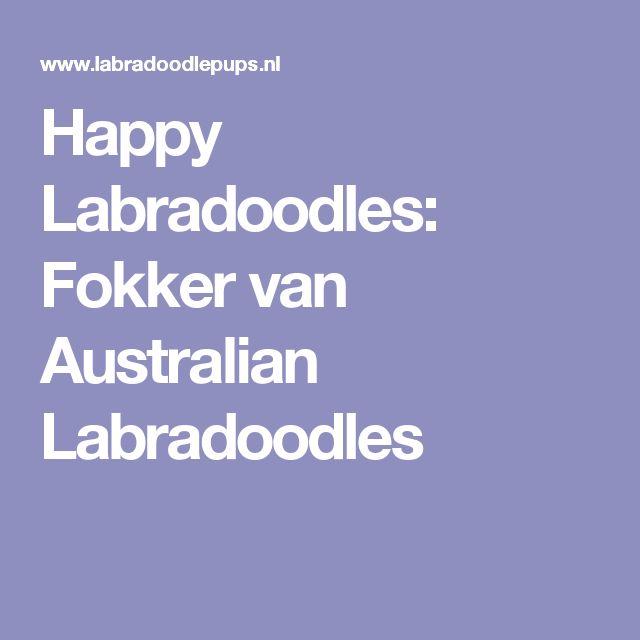 Happy Labradoodles: Fokker van Australian Labradoodles