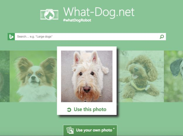 The app Fetch and its site What-Dog.net scans images to tell you what dog it is.