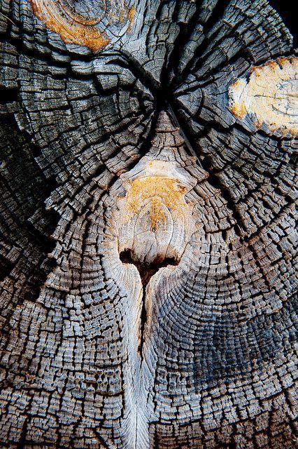Wood texture | Image via flickr.com