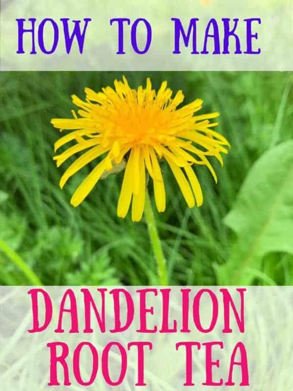Dandelion Root Tea Harvest Prepare And Cook Dandelion Tea Recipe In 2020 Dandelion Root Tea Dandelion Root Dandelion Tea