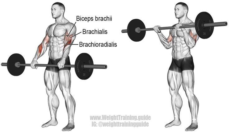 Barbell Reverse Curl An Isolation Exercise Target Muscle