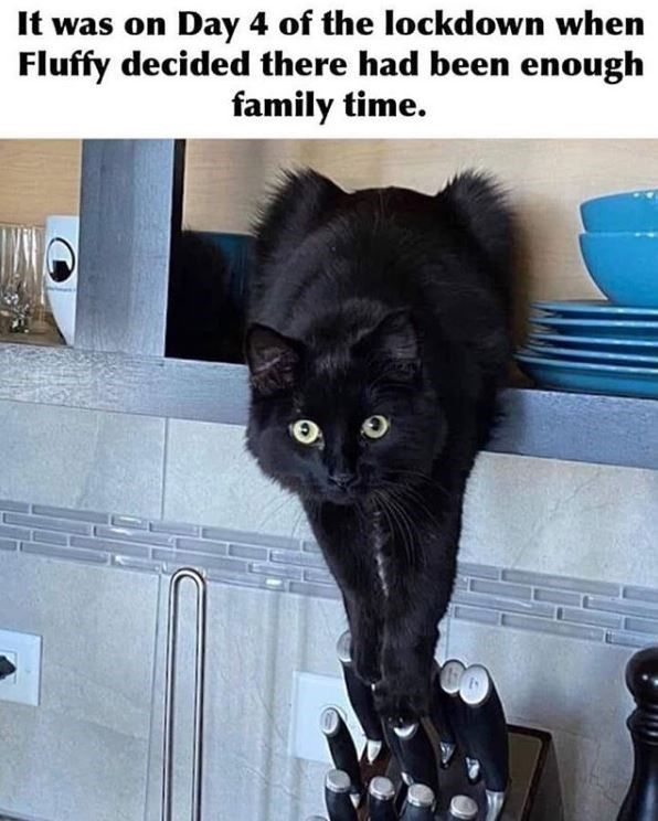 Prepare To Be Wooed By This Caturday Mood 33 Cat Memes Funny Animal Memes Funny Cat Memes Cute Animal Memes