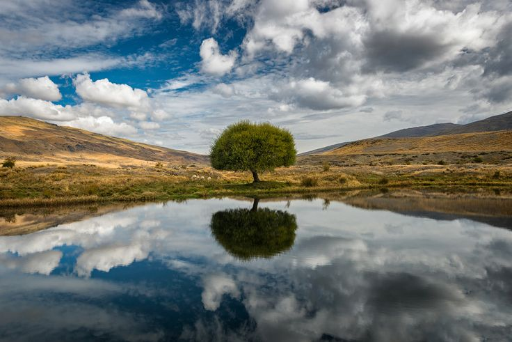 500px / Photo Nevis Lone Tree  by Danny Xeero
