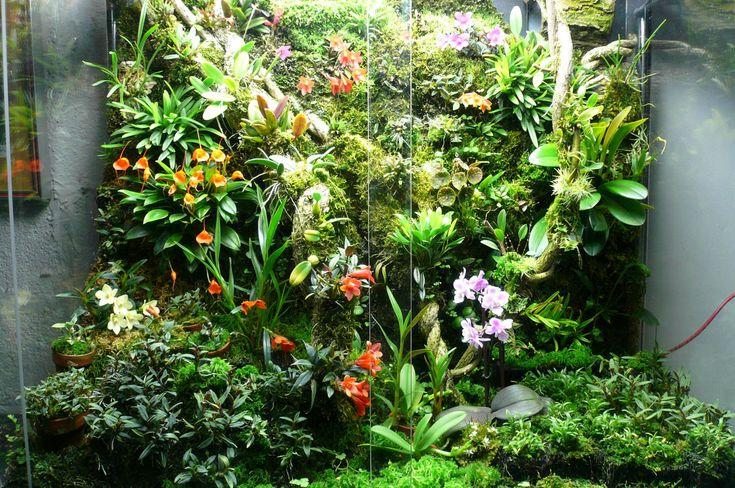 Orchidarium. Mike Leone on OrchidForum.
