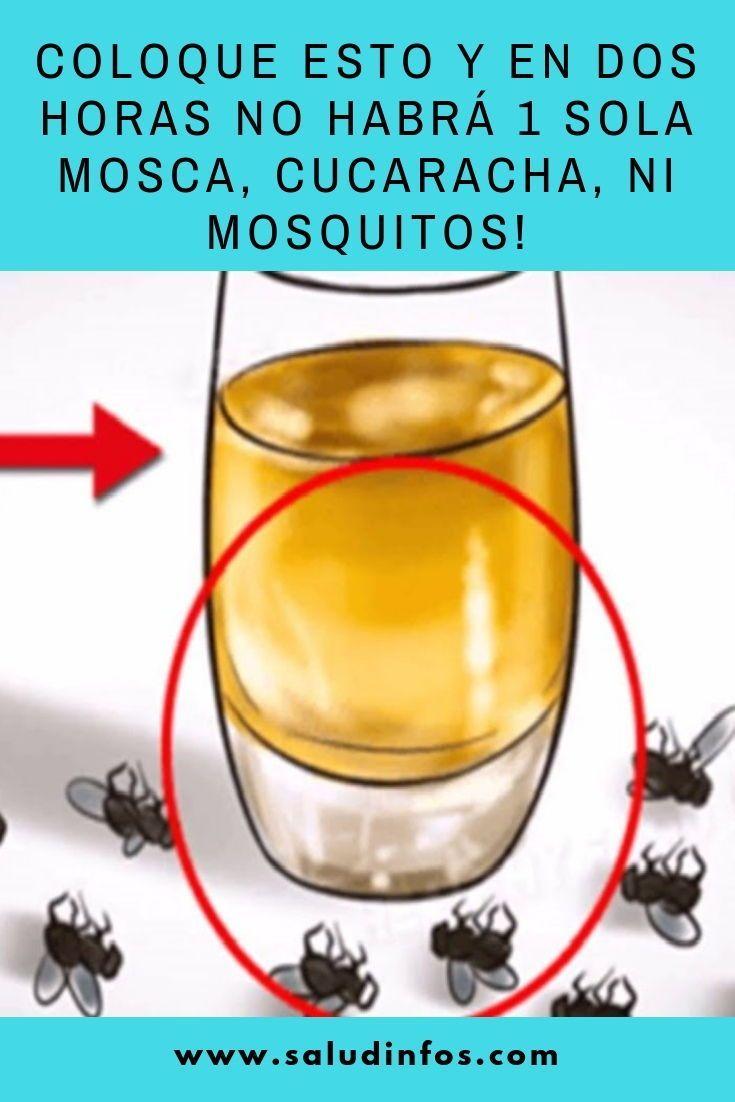 Coloque Esto Y En Dos Horas No Habrá 1 Sola Mosca Cucaracha Ni Mosq Limpiar Los Quemadores De La Estufa Remedios Para Cucarachas Repelente De Insectos Casero