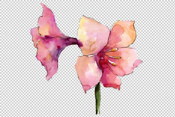 Beautiful watercolor amaryllis PNG set