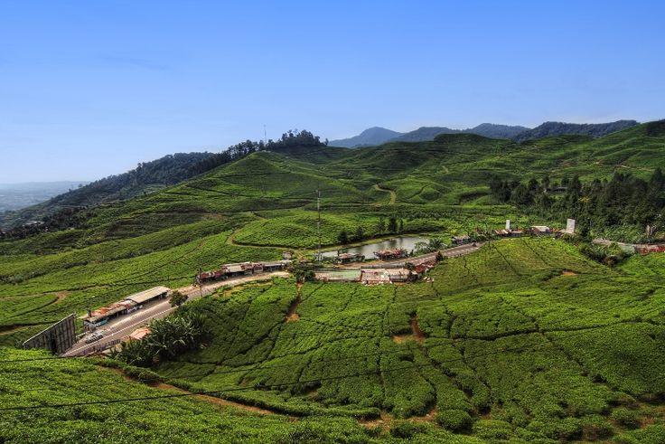 Puncak adalah nama sebuah daerah wisata pegunungan yang termasuk ke dalam wilayah Kabupaten Bogor dan Kabupaten Cianjur. Keindahan daerah ini sangat memukau banyak terdapat juga tempat-tempat rekreasi dan agrowisata yang indah, antara Perkebunan Teh Gunung Mas dan Paralayang.