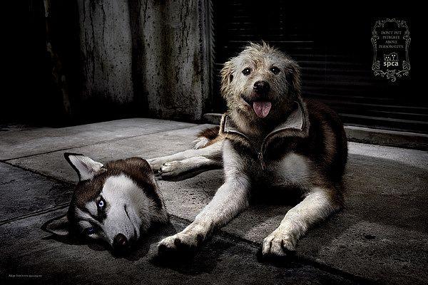 SPCA  #dog #dogs #cat #cats #photomanipulation #art #digitalart #digital #artworks
