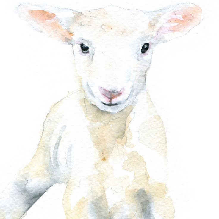 Lamb Watercolor