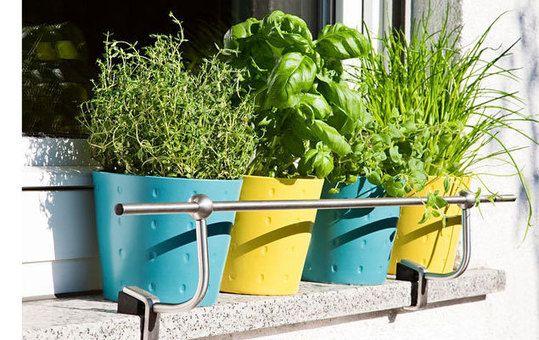 Un mini potager sur un rebord de fen tre my little jardin a cultiver sur mon balcon rebord - My little jardin ...