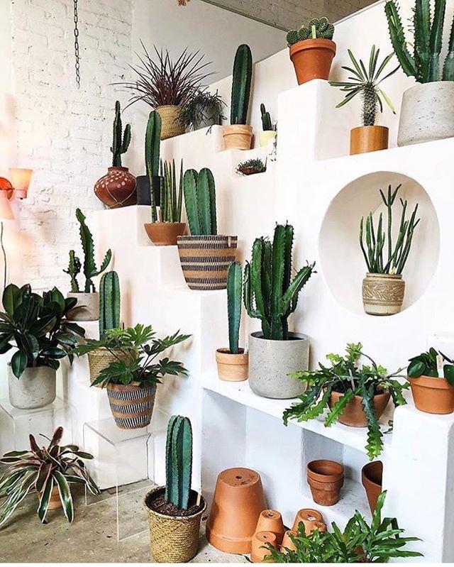 Instagram Analytics Outdoor Indoor Gardens Plants Pinterest