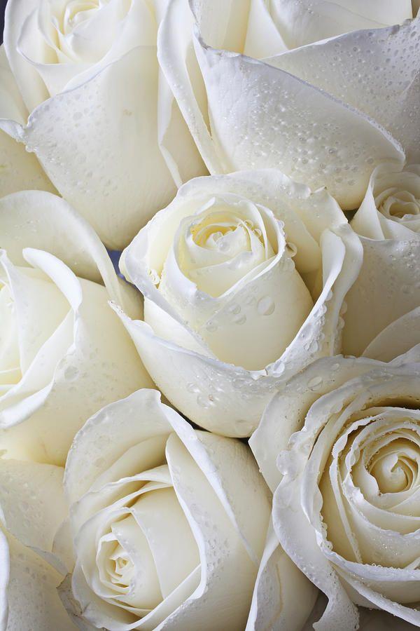 I love a bouquet of white roses, especially around Christmas time. (mkc via Tatiana)