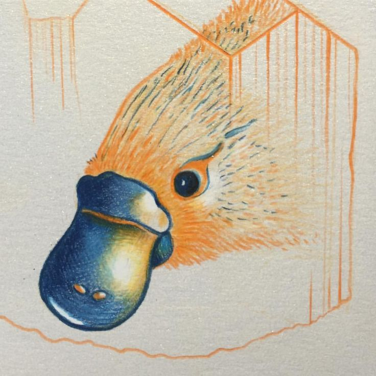 Keeping in the same colour scheme, a platypus inspired by mail from @bushheritageaus  drawn on glitter card stock        #platypus #platypusdrawing #drawing #illustration #illustrate #draw #pencildrawing #pencil #colouredpencil #brisbaneartist #instaart #arttherapy #orange #orangecrystal #crystal #crystalart #australiananimal #crystalenergy #crystallove #animalspirit #spiritanimal #bushheritage #protect #sustain #encourage #animalrights