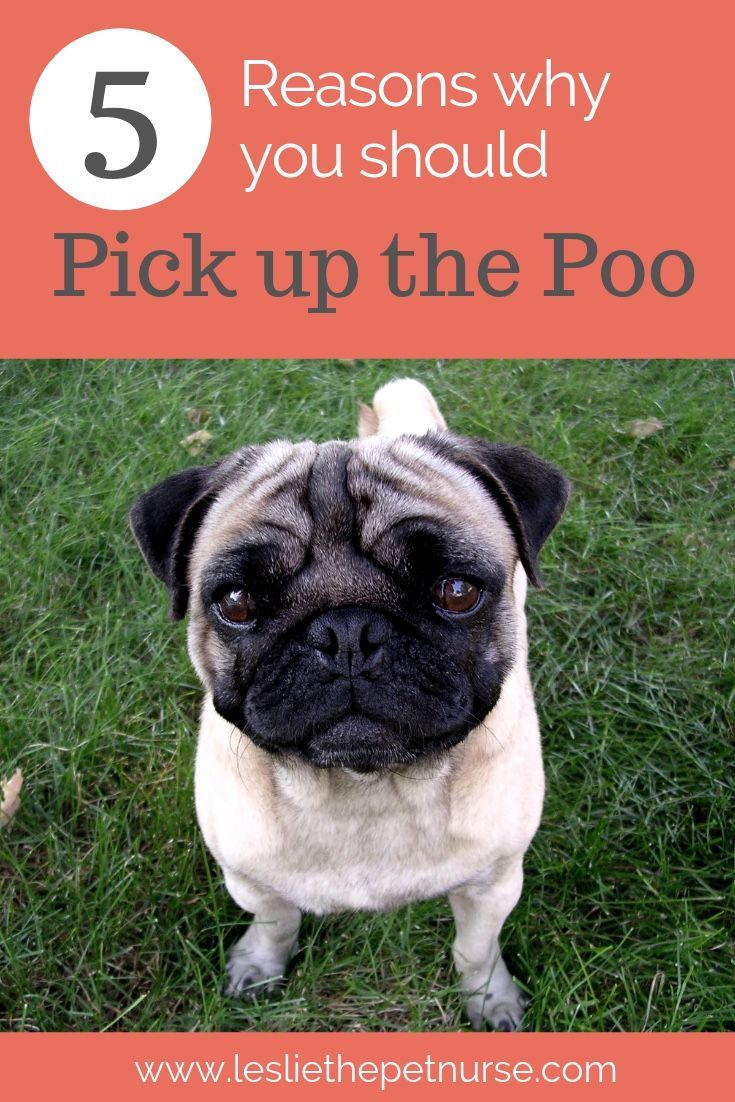 Picking Up The Poo Pets Dogs Pooping