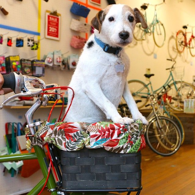 Happy doggone Friday! Thanks, Mark, for letting your pooch, Leonardo, pose for us. #publicbikes #publicbike #bikeanddog #doginbasket #tgif by publicbikes http://ift.tt/1Exu2zH