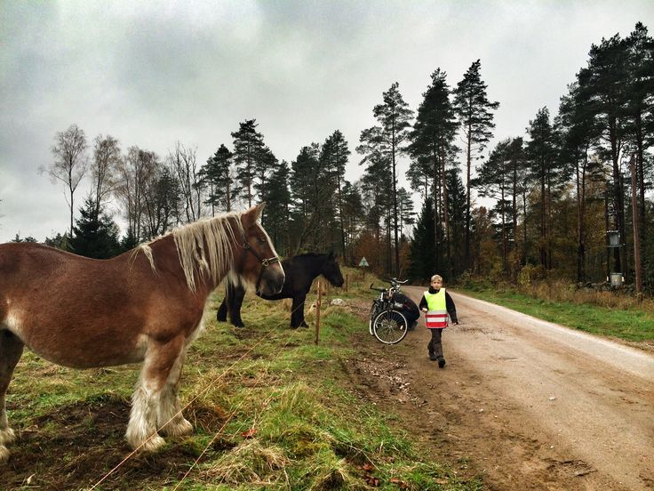 Laurits with the horses
