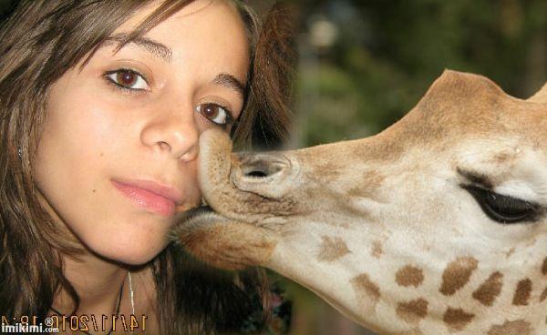 bitt-giraffe