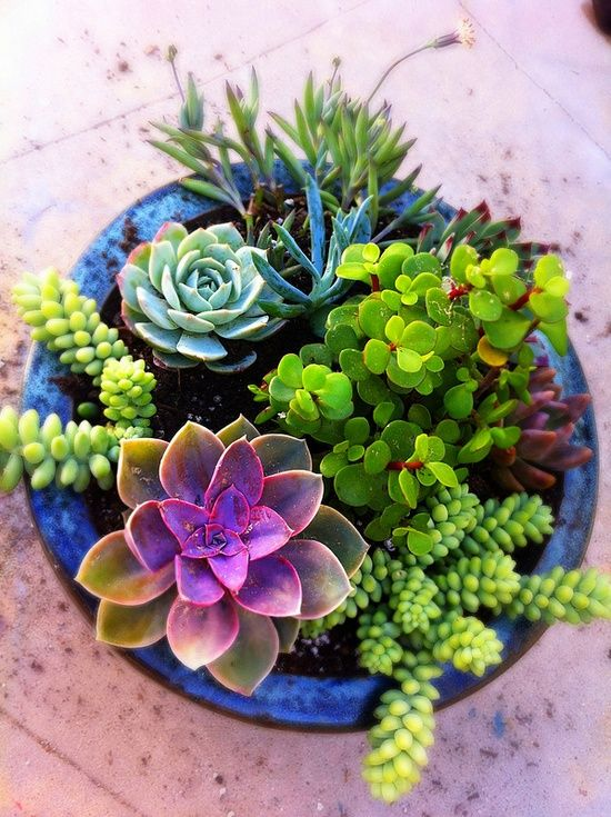 Potted Succulents | Great job of mixing color, shape and texture. Best of all, they are drought tolerant!!
