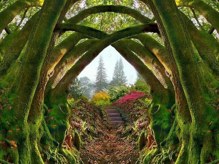 Wonderful Meditation. The Secret GardenSecret ...