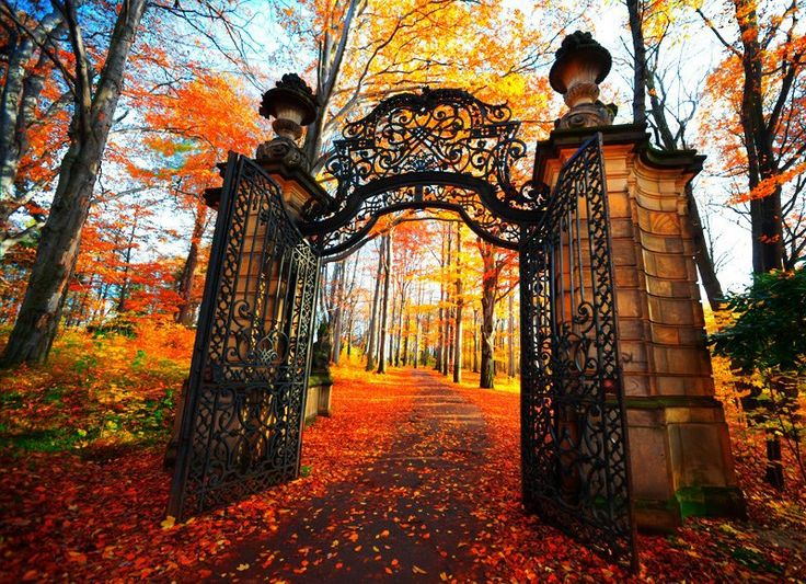 Ok, not gonna lie, I have occasionally fantasized about having a grand entrance with a wrought iron gate.