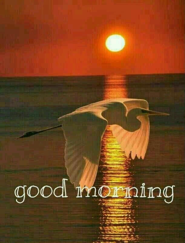 Good Morning Beautiful Birds Images : Best ♦good morning good night♦ images on pinterest