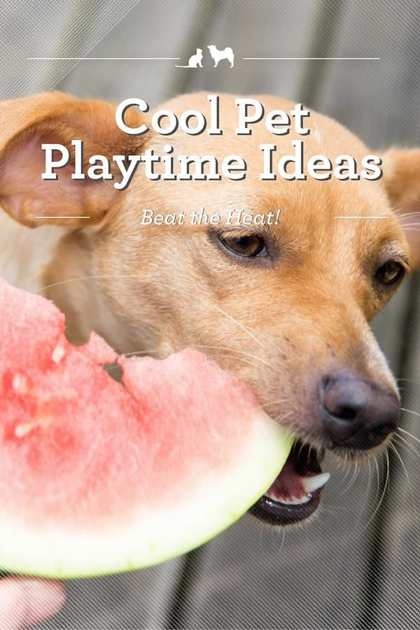 Cool Pet Playtime Ideas. play and exercise are just as important for pets (and pet parents!) when it's hot outside as they are when the temperature is more comfortable. The trick is getting that pet playtime in without putting your furry friend at risk for heat stroke! Here are a few cool pet playtime ideas to help you beat the heat - and have fun doing it! via @kristenlevine #client