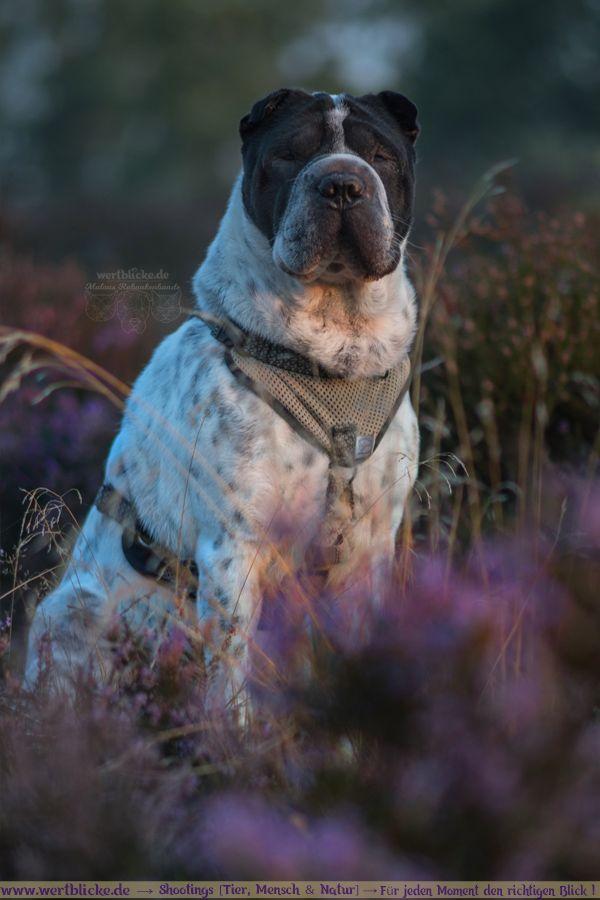 Augenblicke Jeder Noch So Kleine Moment Ist Eine Erinnerung Wert Lass Hunderassen Tiere Hund Und Hunde
