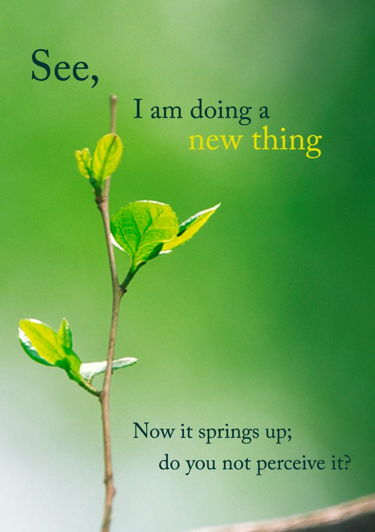 Isaiah 43:19 See, I am doing a new thing. Now it springs up; do you not perceive it?