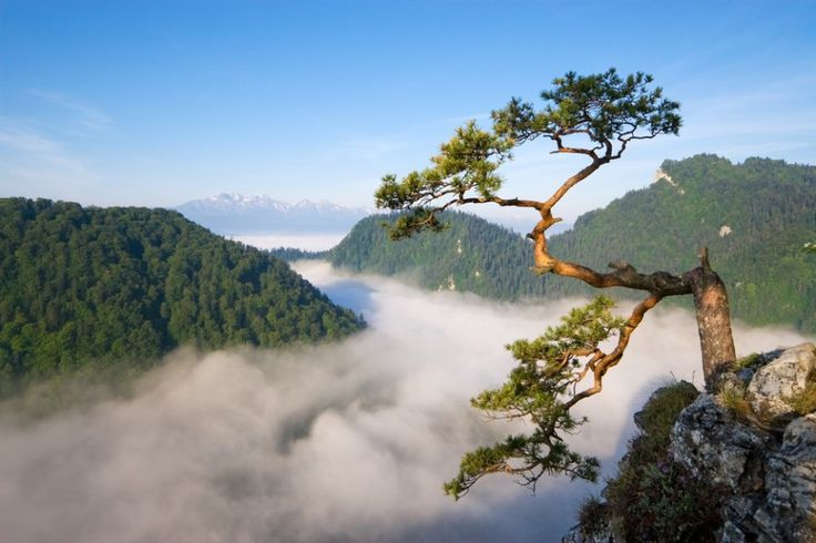 Pieniny // Do you want to visit Pieniny? check http://eltours.com/tailor-made-customized-tours