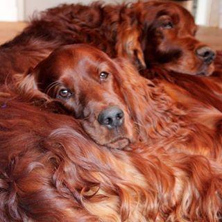 Leporello mit Hundephoto - Hundebloghaus